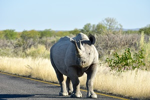 Safari Club Tours - Namibia Etosha White Rhino