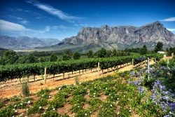 Safari Club Region - South Africa Western Cape Stellenbosch Simonsberg Mountains