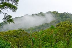 Safari Club Region - Uganda Bwindi Impenetrable Forest