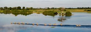 Safari Club - Botswana_in_Focus