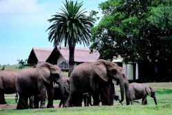 Safari Club Premium Accommodation - Gorah_Elephant_Camp
