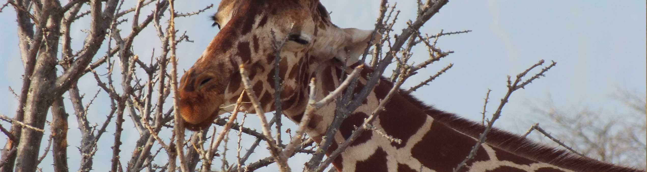 Safari Club - Kenya_Samburu_National_Park