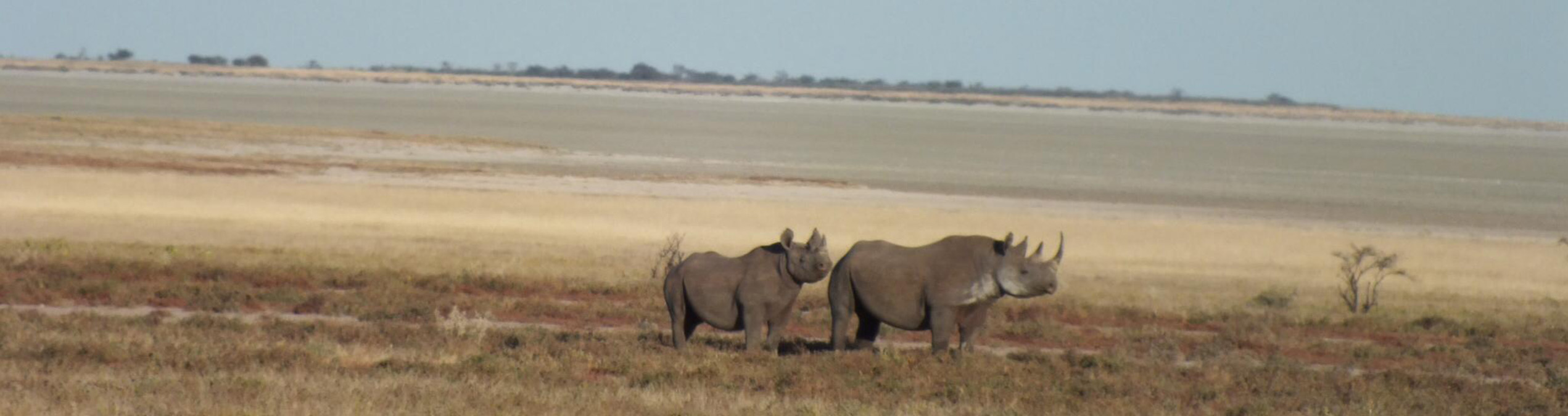 Safari Club - Namibia_Etosha_National_Park_Black_ Rhino
