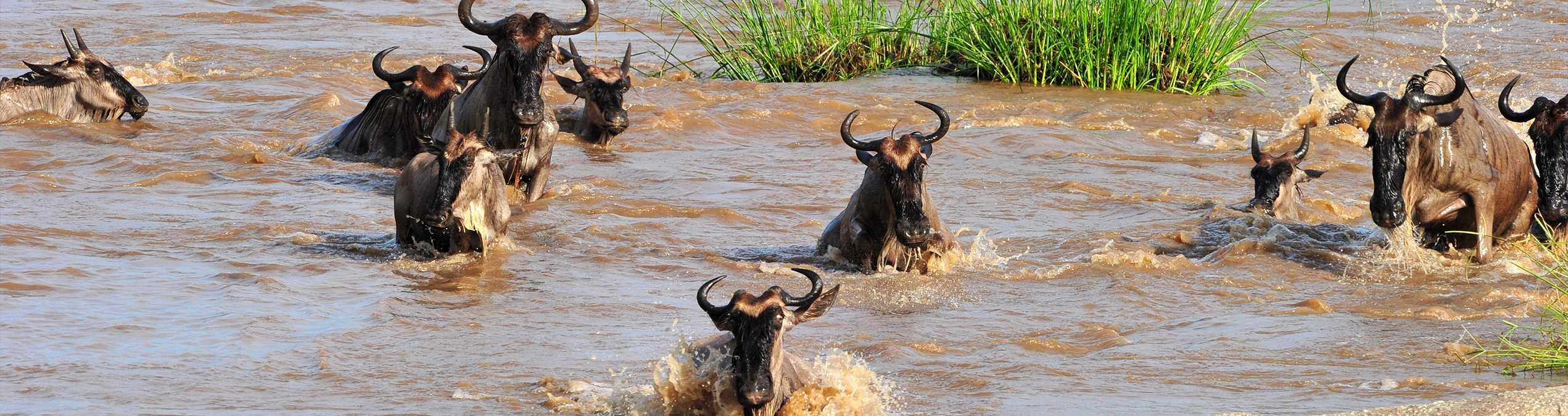 Safari Club - kenya