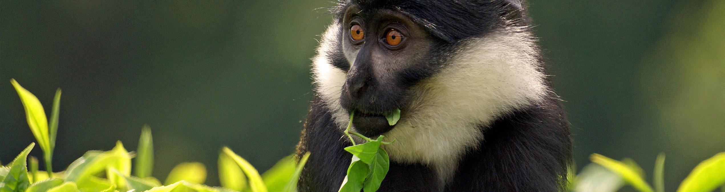 Safari Club - rwanda