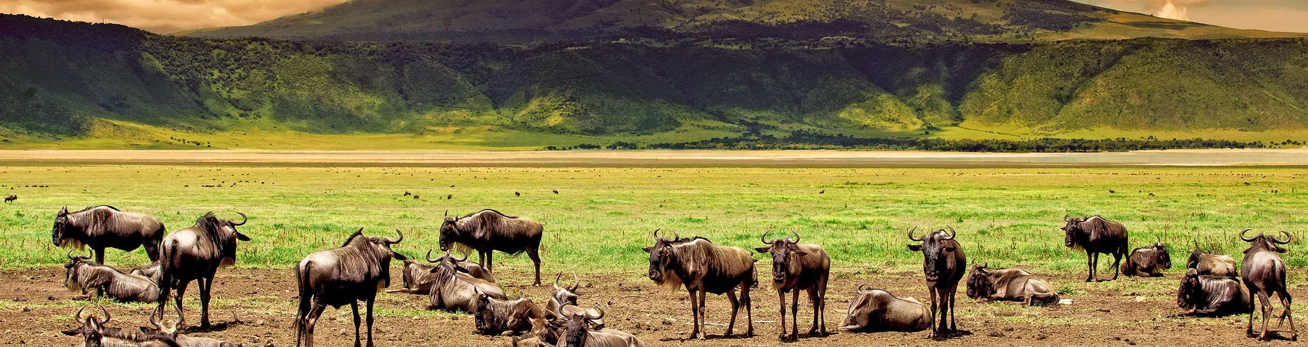 Safari Club - tanzania