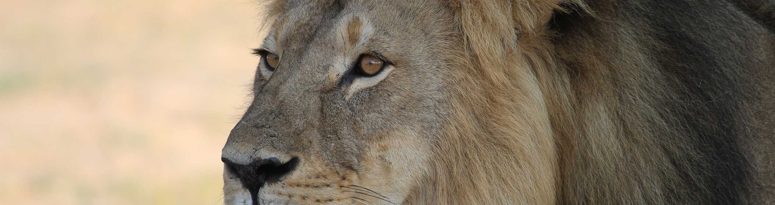 Safari Club - zimbabwe
