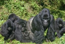 Safari Club Photos - Gorilla Trecking Tour