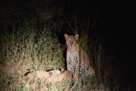 Safari Club - Night Game Drives
