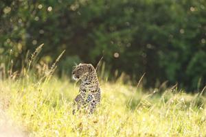 Safari Club - Connoiseurs_Kenya