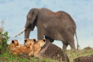 Safari Club - Conservation_and_Safari