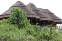 Safari Club Classic Accommodation - Kasenyi-Safari-Camp-Uganda