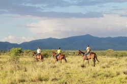 Safari Club Classic Accommodation - Manyara_Ranch_Conservancy