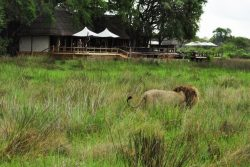 Safari Club Premium Accommodation - Sanctuary_Chiefs_Camp