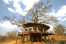 Safari Club Classic Accommodation - Tarangire_Treetop_Lodge