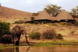 Safari Club Classic Accommodation - Tortilis_Camp