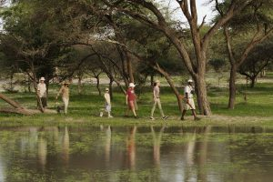 Safari Club - Guided Family Bushwalk Footsteps Young Exploreres