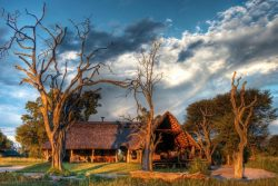 Safari Club Entry Accommodation - Bomani_Tented_lodge