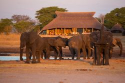 Safari Club Classic Accommodation - Camp_Hwange