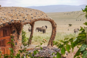 Safari Club - Elephant_in_front_of_water_hole