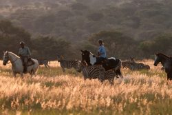 Safari Holidays & Tours - Horizon Horseback safaris