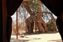 Safari Club Classic Accommodation - Kigelia_Camp