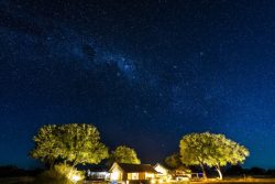 Safari Club Premium Accommodation - Linkwasha_Camp