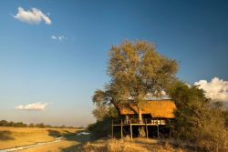 Safari Club Classic Accommodation - Lion_Camp