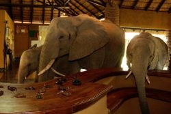 Safari Club Entry Accommodation - Mfuwe_Lodge