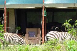 Safari Club Classic Accommodation - Offbeat_Mara_Camp