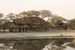 Safari Club Classic Accommodation - Onguma_Tree_Top_Camp