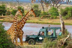 Safari Club Entry Accommodation - Samburu_Intrepids