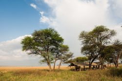 Safari Club Classic Accommodation - Serengeti_Safari_Camp