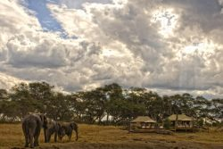 Safari Club Classic Accommodation - Somalisa_Camp