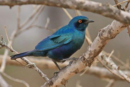 Birds at Timbavati 1