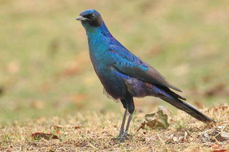 Birds at Timbavati 2