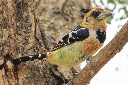 Birds at Timbavati 3