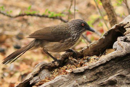 Birds at Timbavati 4