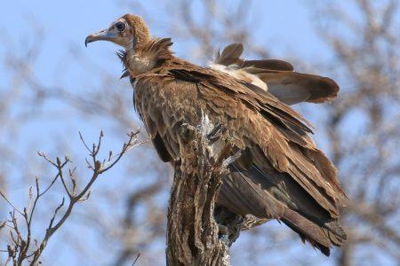 Birds at Timbavati 6