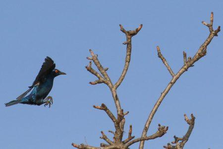 Birds at Timbavati 7