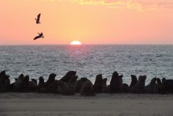 Safari Club Photos - Cape fur seals at Walvis Bay