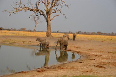elephant at water hole Hwange