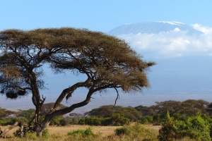 Safari Club Tours - Kenya Amboseli Mt Kilimanjaro