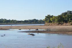 Safari Club Region - Luangwa River scene