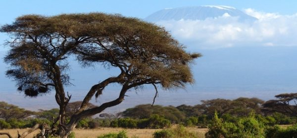 Safari Club - Mount Kilimanjaro