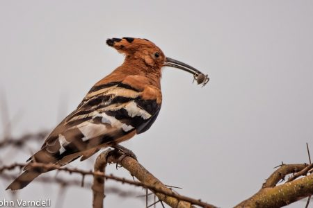 Tanzanian birds 1