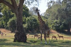 Safari Club Photos - Typical South Luangwa scene