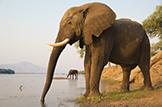 Safari Club - Zambia elephant