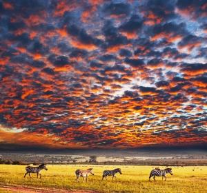 Safari Club - Great Value Safaris