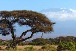 Safari Club - Kenya Amboseli Mt Kilimanjaro